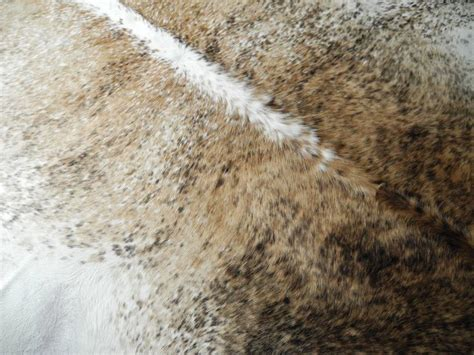 how to clean a cow skin rug clean and modern large white brown and genuine cow hide rug at 1stdibs