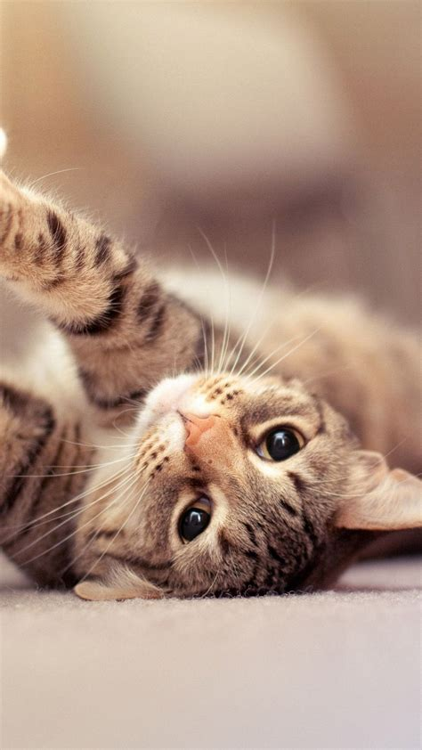 cute cat iphone  wallpapers hd