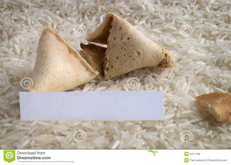 fortune cookie in bed fortune cookie on a rice bed royalty free stock photos