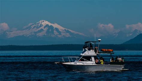 fast boat whale watching seattle our boats seattle orca whale watching