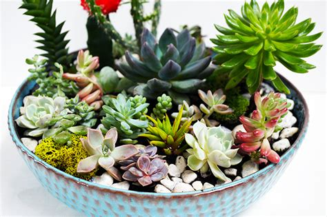 cactus planter how to make a succulent and cactus planter bowl for keeps blog