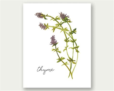 free printable herb poster sale kitchen wall art herb print thyme wall art kitchen