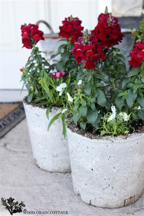 Cement Flower Planters by How To Make Concrete Flower Planter Pots Fox Hollow Cottage
