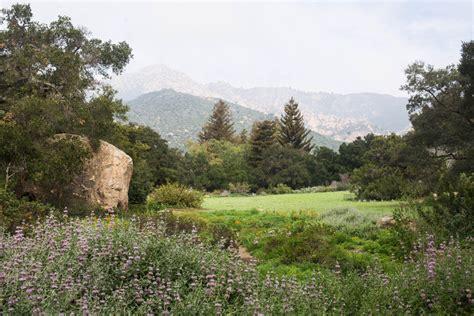 santa botanic gardens santa barbara botanic gardens tea