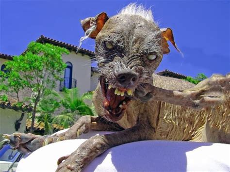 Shoo Anjing the ugliest animals of the world