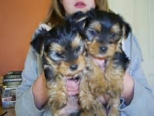 puppies for sale enterprise al dogs enterprise al free classified ads