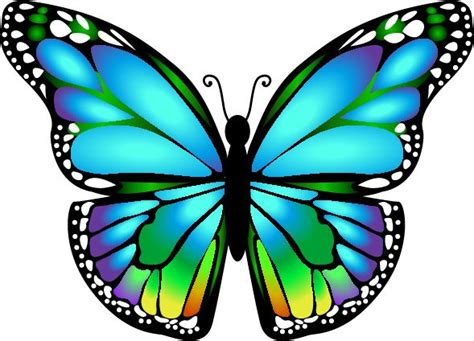 imagenes de varias mariposas monarch butterfly clipart masculine pencil and in color