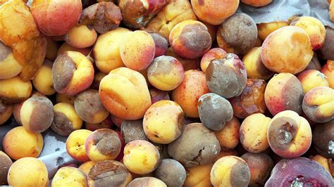7 Uses For Fruit by How To Use Up Fruit That S Past Its Prime Without Wasting