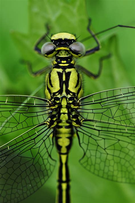 free detailed macro images and stock photos freeimages free stock photo of dragonfly wing insect