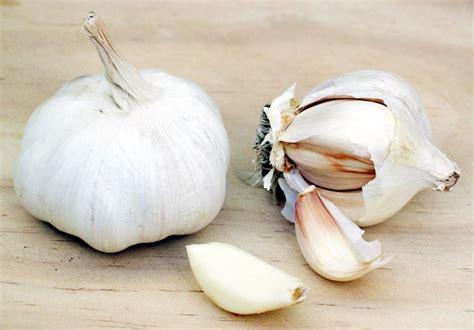 piantare aglio in vaso semina aglio frutteto come seminare l aglio