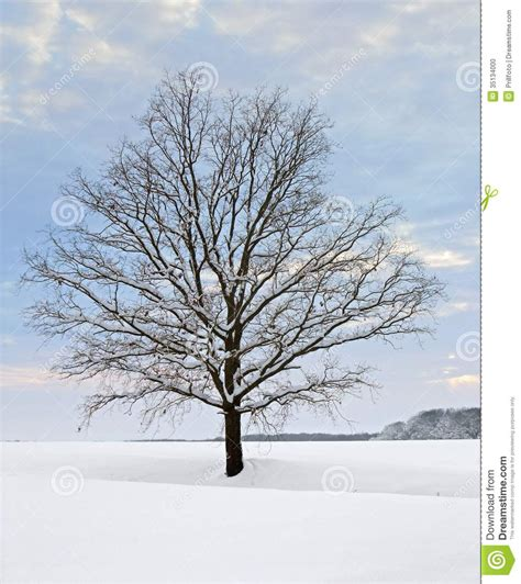 Winter Tree At Evening Time Stock Photo   Image: 35134000