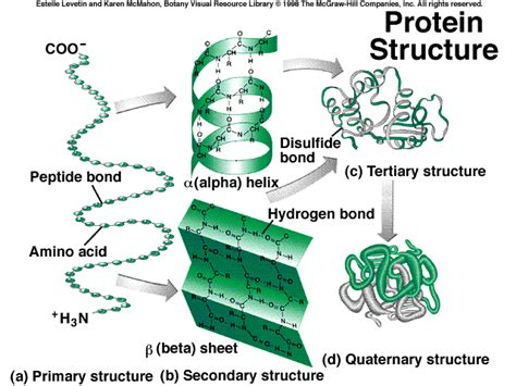 4 protein structures amino acids biochembloggang