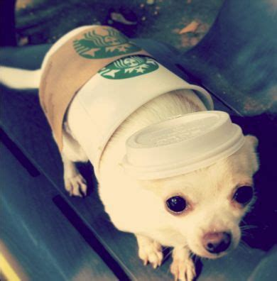 starbucks puppy cup 30 costumes for dogs that will put a smile on your