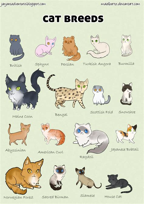 types of cats types of cats