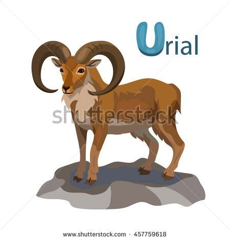 urial u letter children animal alphabet in vector urial stock images royalty free images vectors