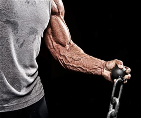 forearm workout plan exercise