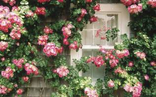 The Floral Cottage flowers in the window flower wallpapers free wallpapers windows xp desktop