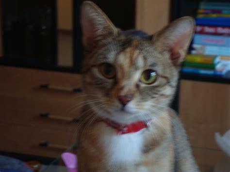 katze neues zuhause tiere katzen kleinanzeigen seite 10