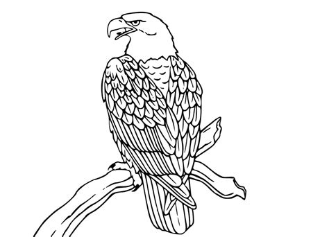 eagle feather coloring pages eagle feather coloring coloring pages