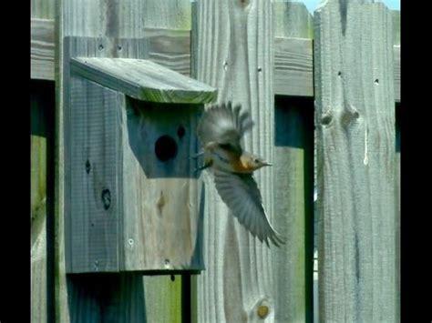 how to build bluebird houses bluebird predator guards protect your bluebird nest doovi