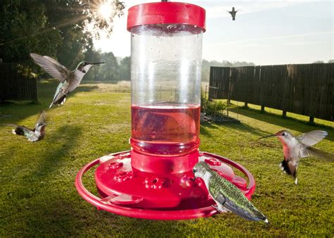 attract hummingbirds with colorful plants mississippi