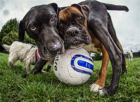 dogs at play triumphs as photographer of the year revealed
