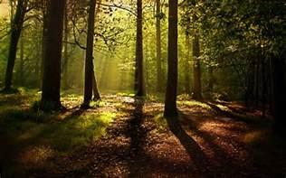 Forest Background 18573 1920x1200 px ~ HDWallSource.com