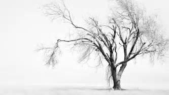 white tree black and white trees wallpaper hd desktop wallpapers