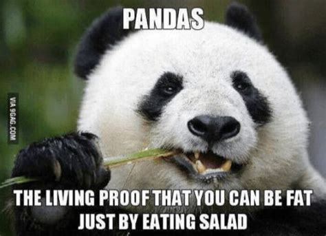 Memes De Pandas - 9 best images about birthday memes on pinterest birthday