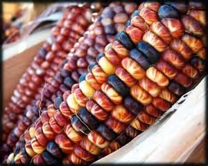 colorful corn colorful corn photograph by kristine ellison