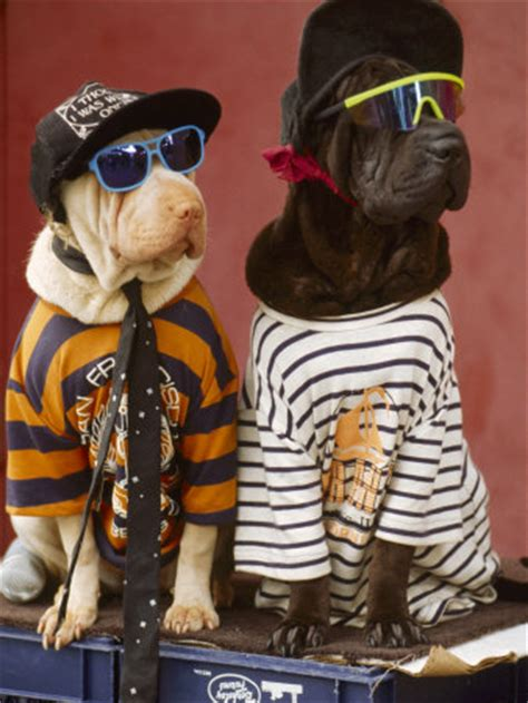 puppies wearing clothes do dogs like to wear clothes the pet product guru