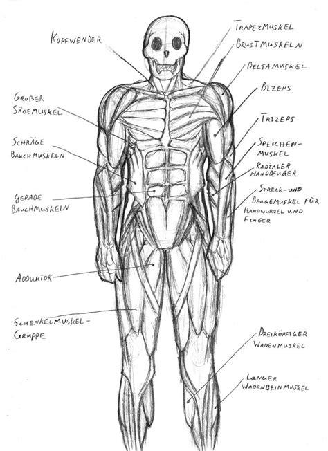 diagram of muscular system diagram of human muscles system human muscular system