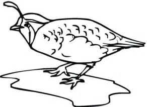 coloring pages quail quail bird coloring page supercoloring