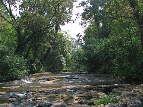 stream bed file india kerala 042 stream bed trekking in periyar 2078415336 jpg