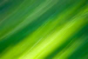 21 green textures photoshop textures patterns