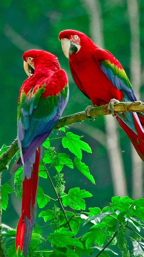 design love fest costa rica parrots paradise samsung galaxy note 3 wallpaper samsung