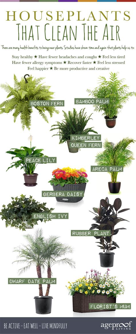 best plants 10 houseplants that clean the air urban planters
