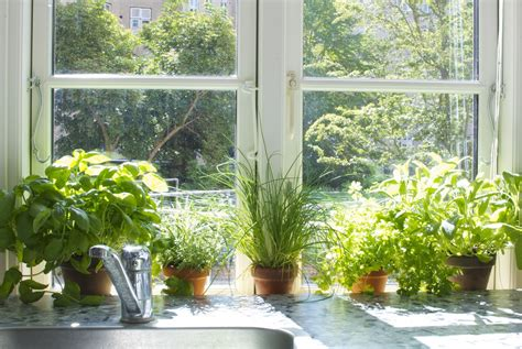 inside herb garden creating an herb garden indoor the sill the plant hunter