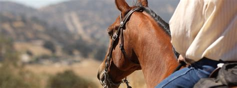 laminitis recovery plan road to recovery learning to manage and plan for the future