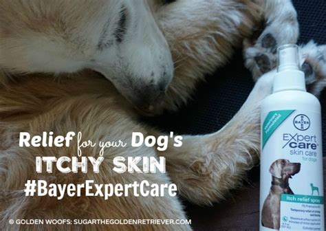 itch relief for dogs relief for your s itchy skin bayerexpertcare golden woofs