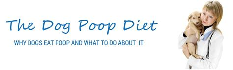 Why Does Keep Pooping In The House by The Diet Coprophagia Why Dogs Eat And