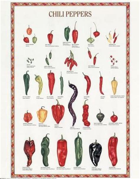 Design Firm Names by Chili Peppers Fruit Seasons