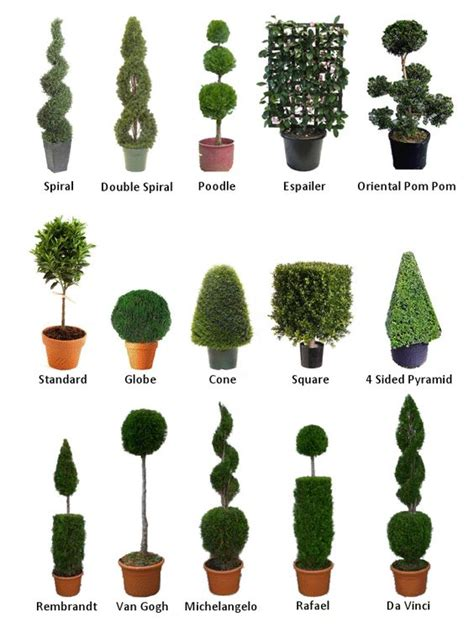 topiary forms for the world s catalog of ideas