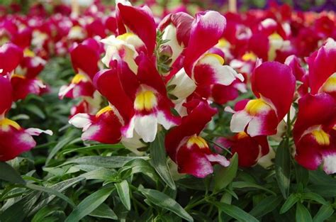 fiori da piantare a marzo seminare le piante da fiore speciali seminare le
