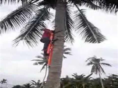 alat pemanjat pokok kelapa alat pemanjat pokok kelapa