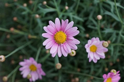 Pink Small Flowers small pink flowers domain free photos for