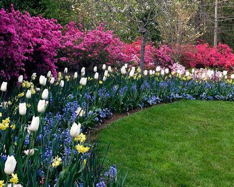 Schmale Beete Vor Hecke Und Mauer Bepflanzen by Beetgestaltung Ideen Mit Kontrastierenden Blumen Und