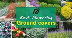 Easy Indoor Gardening Ideas - 18 best flowering ground cover plants balcony garden web