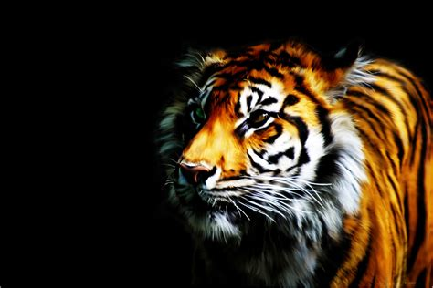 tiger print full hd wallpaper and background image computer wallpaper desktop background wallpapersafari