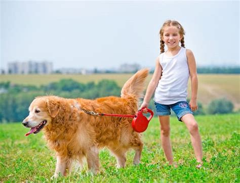 what were golden retrievers originally bred for 11 family friendly breeds part 4